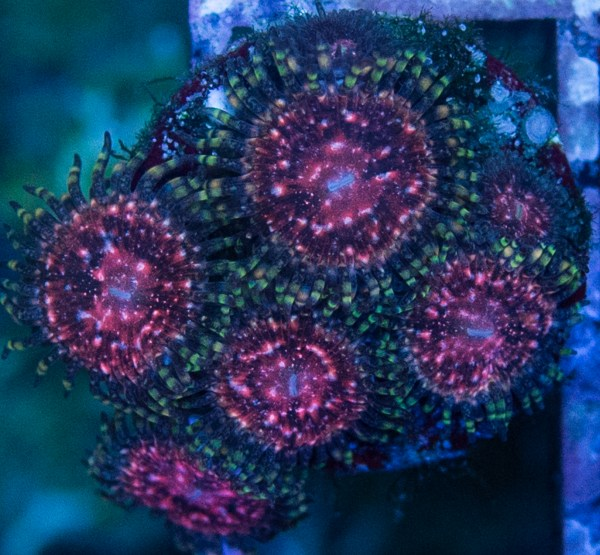 Tyree Space Monster Zoas