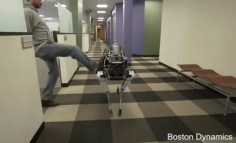 Stop the abuse of robot dogs