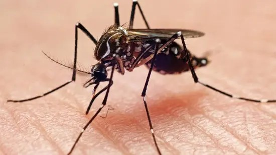 Mosquito biting a person