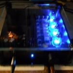 FEEL HP2000 FET amplifier for headphones audiphile