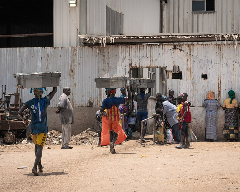 Carrying crates on fish into a fishmeal factory in The Gambia