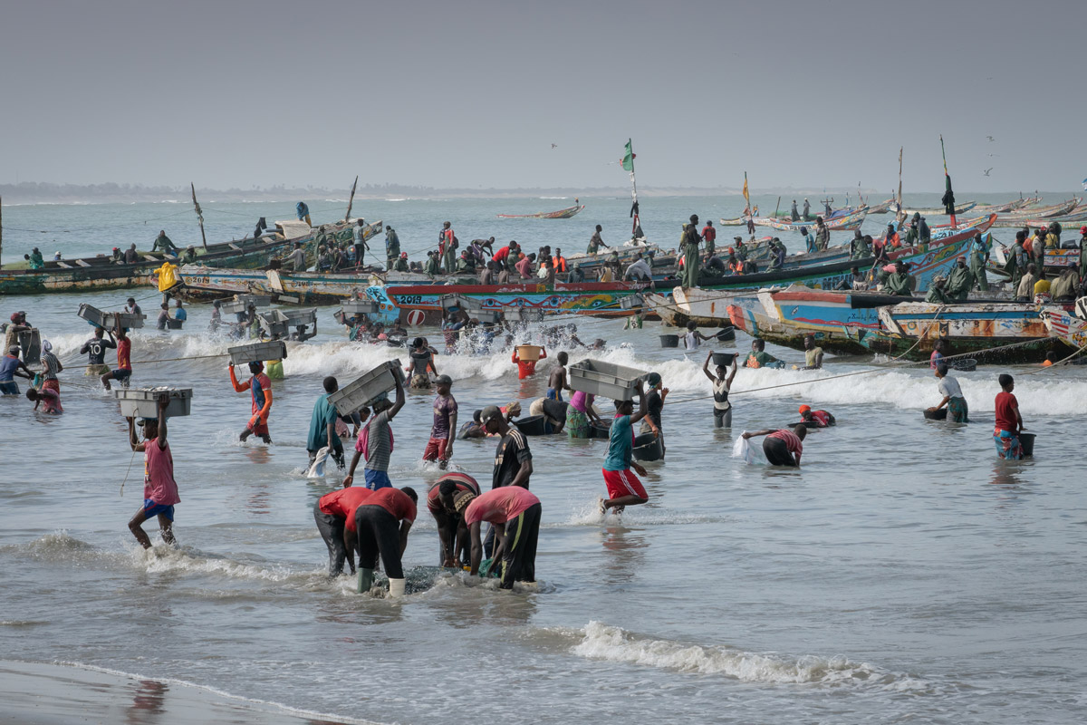 Fisherman bringing their catch to shire in Gunjur, The Gambia