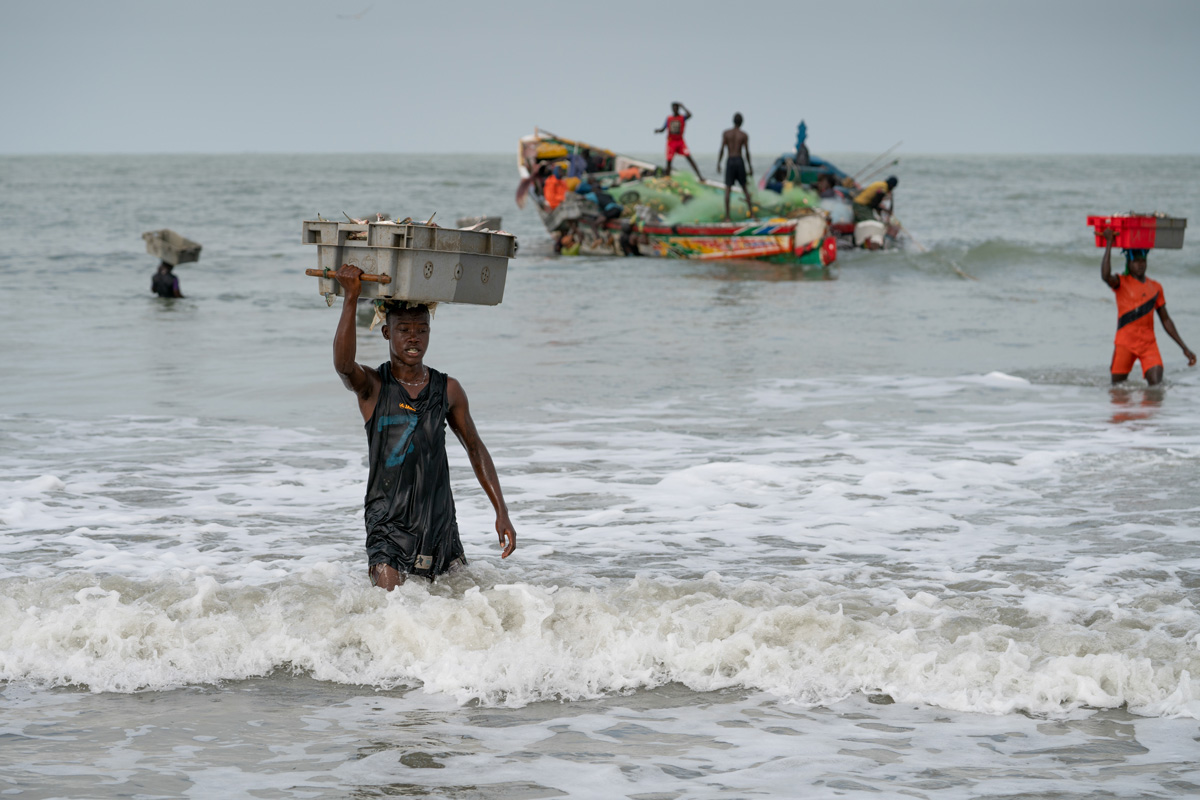 Young fisherman carrying a crate of fish, The Gambia