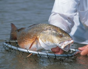 how to catch redfish 4