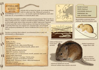 Juttselg-hiire kohta