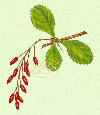 Kukerpuu