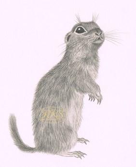 "J.Rannap ""Kõverkäpp"" illustratsioon"