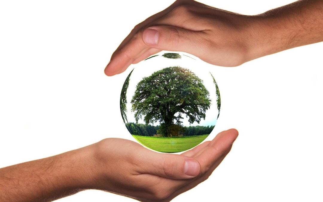 Produits Bio & Naturels, Classement SEO des marketplaces