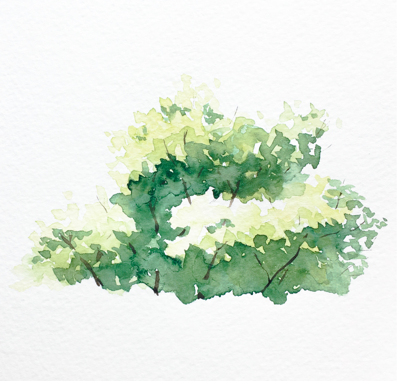 watercolor bushes and trees