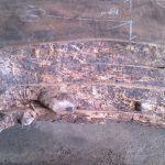 California Claro live edge walnut slabs