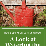 How Does Your Garden Grow?  A Look at Watering the Soul