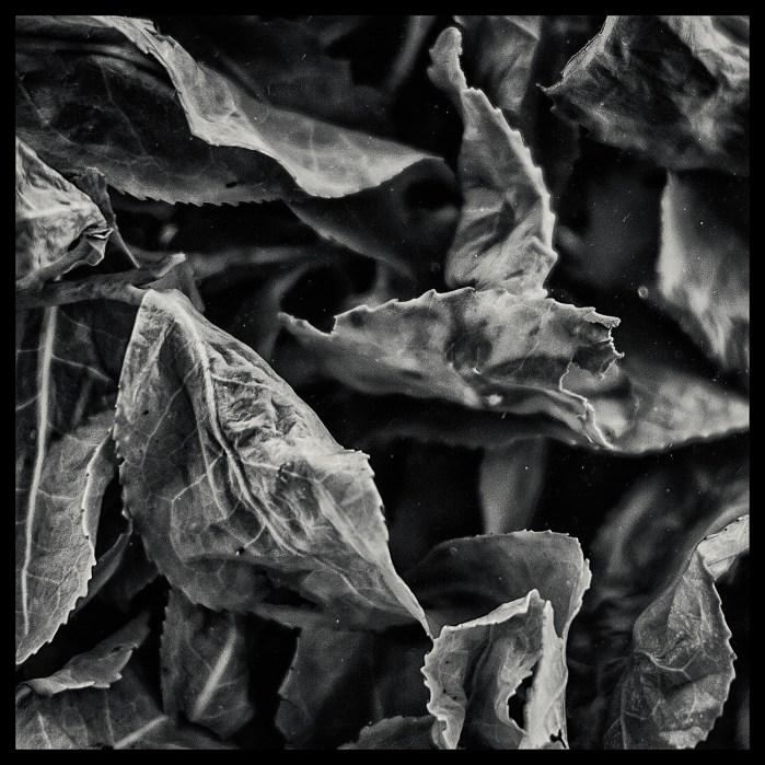 Tea_leaves