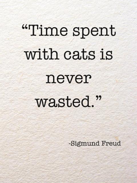 Cat-Quotes-47