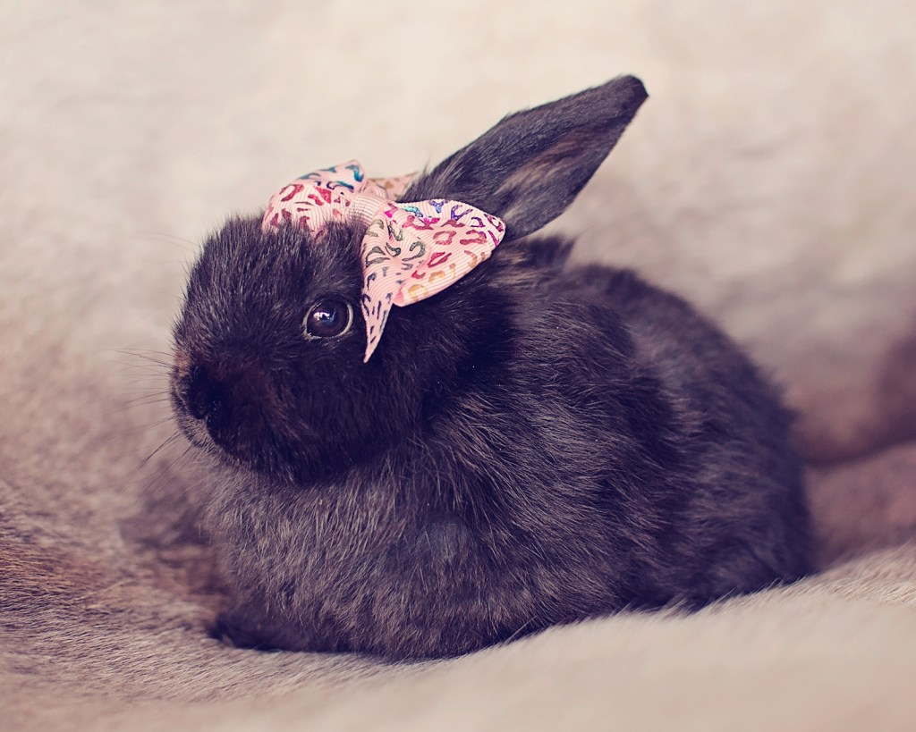 Easter16-roxy