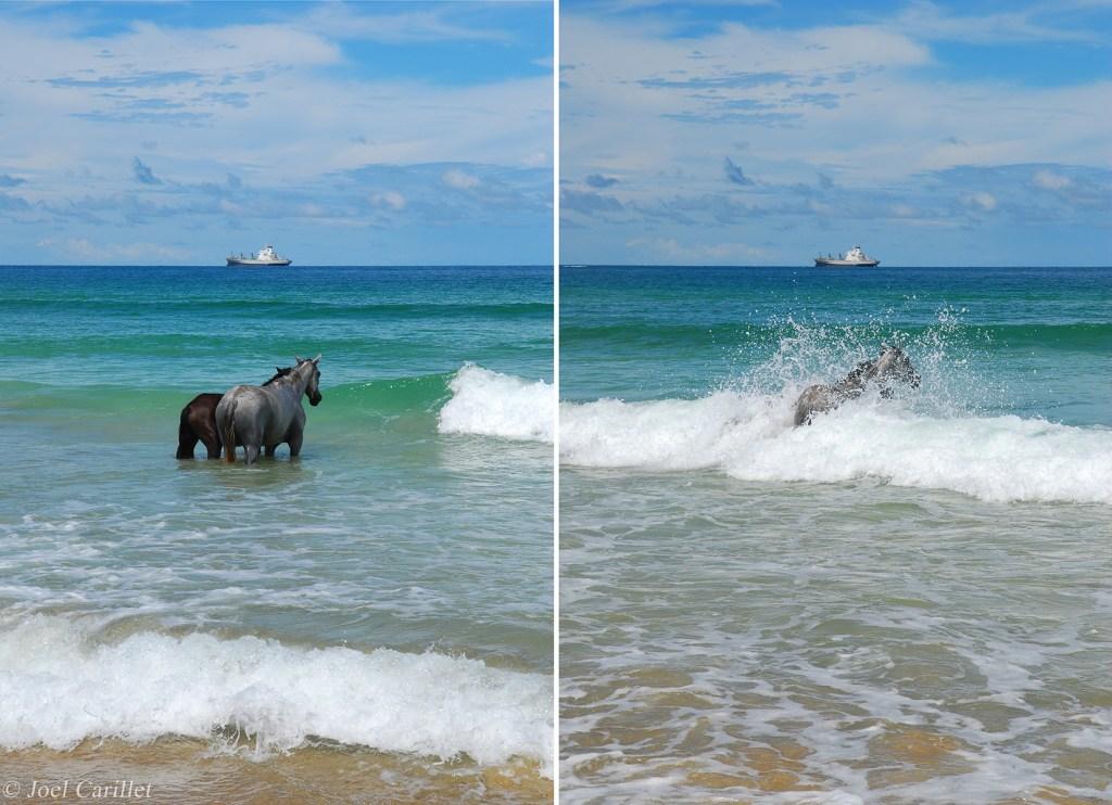 Horses on Isla Bastimentos in Bocas del Toro, Panama