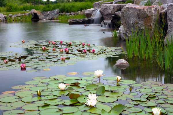 large commercial water garden