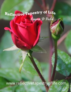 Photo by Laura D. Field of Reflective Tapestry of Life