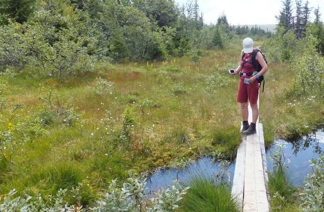 Vandre over vand. Der er udlagt gangplanker hvor stierne krydser vådeområder. En fantastisk service.