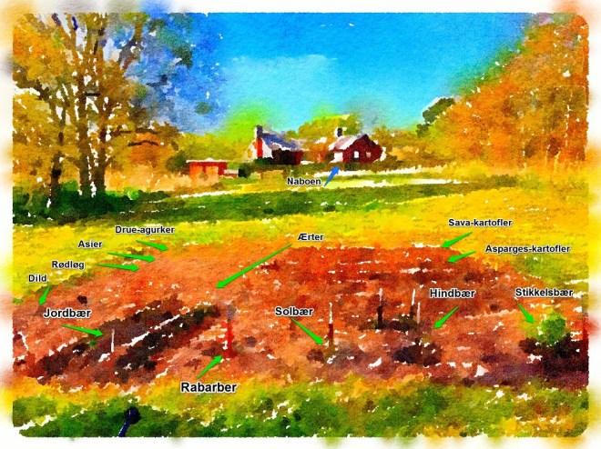 Haveplan køkkenhave