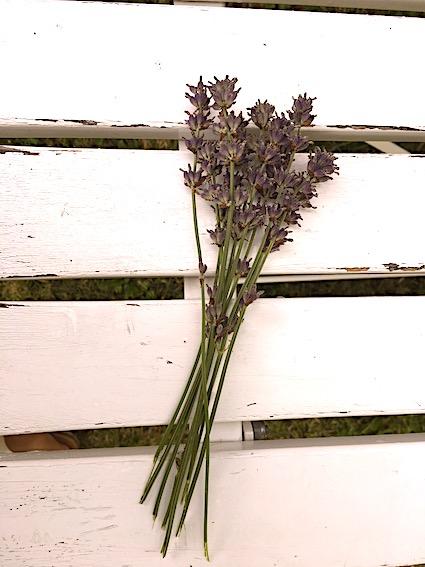 Lavendelblomster