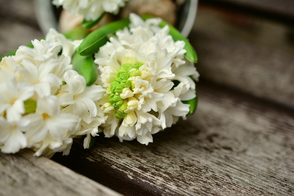 La jacinthe, l'étoile de l'amour
