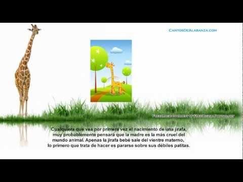 La Lección De Las Jirafas | Reflexión Cristiana Gratis