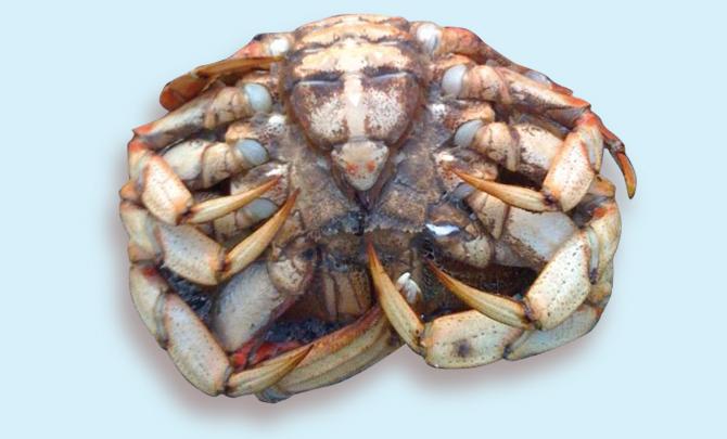 Jumble sales of the apocalypse: Divine crustaceans