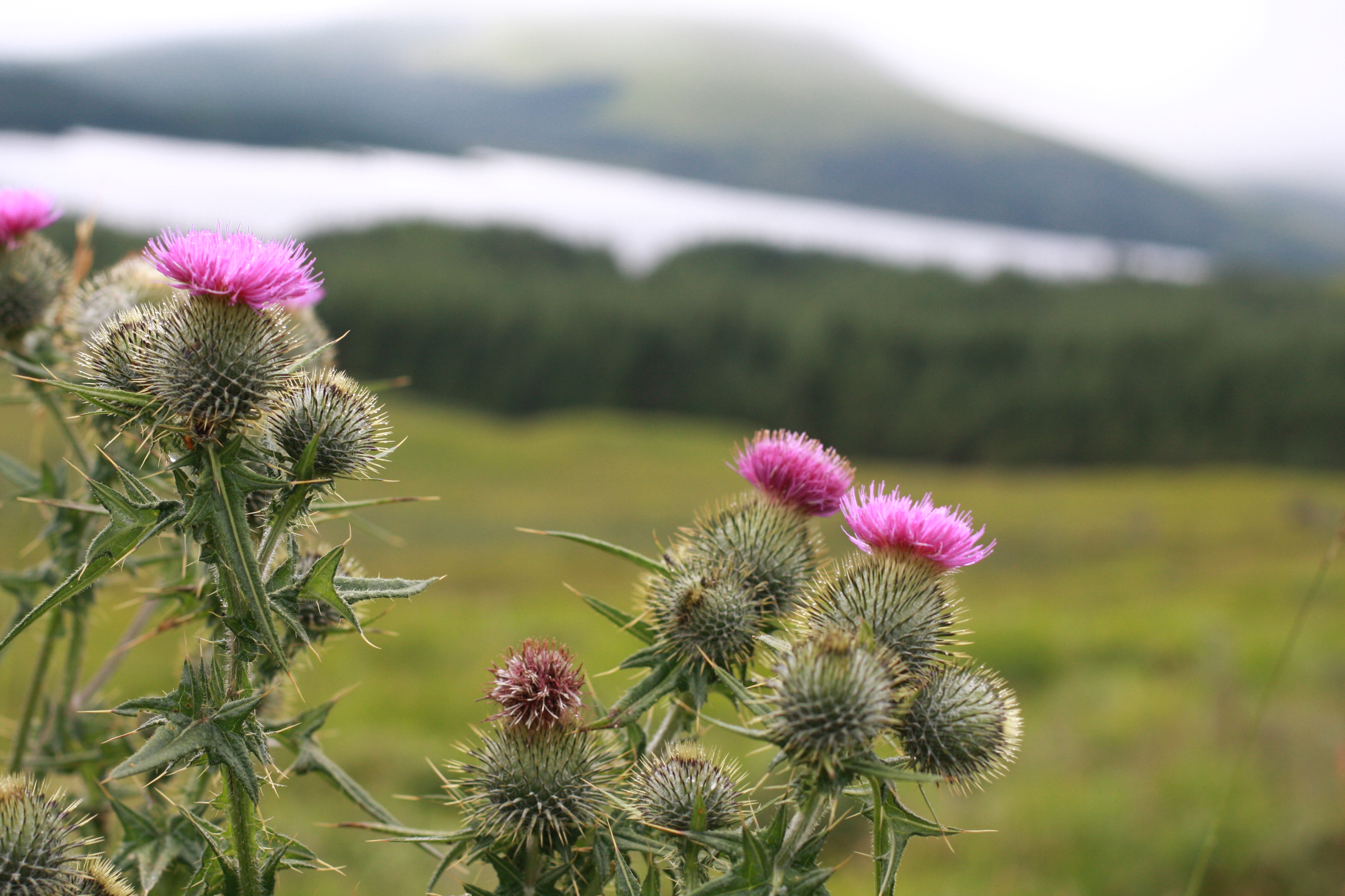 thistle scotland tours