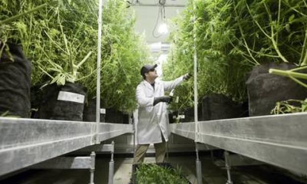 Texas House passes bill to vastly expand access to medical cannabis
