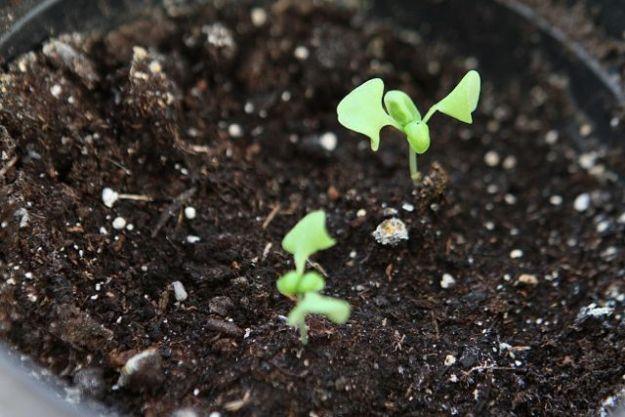 Auch mit torffreier Erde lassen sich jetzt spielend Kräuter anzüchten