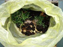 Unten feuchte Kartons, darüber Würmer und Küchenabfälle, obendrauf wieder feuchte Eierkartons