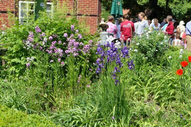 Am Bauerngarten bekam man gegen eine Spende Weidepflanzen für Bienen - z.B. Phacelia