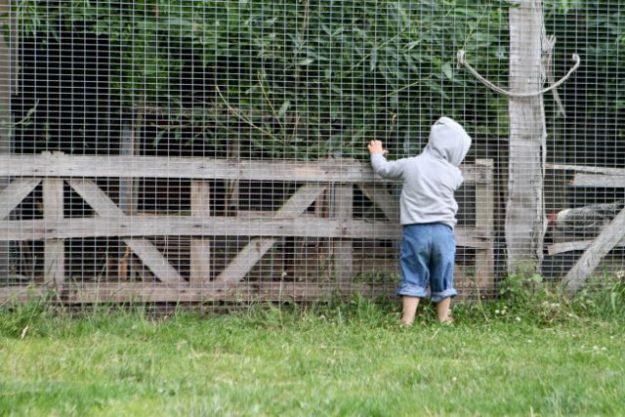 Lernen, wie Hühner ticken - damit kann man nicht früh genug anfangen