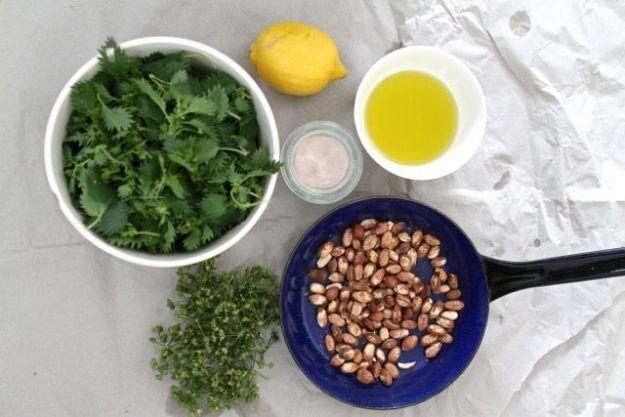 Zutaten für Pesto: Brennessel, Bärlauchsamen, Haselnüsse, Zitronenschale, Olivenöl, Salz
