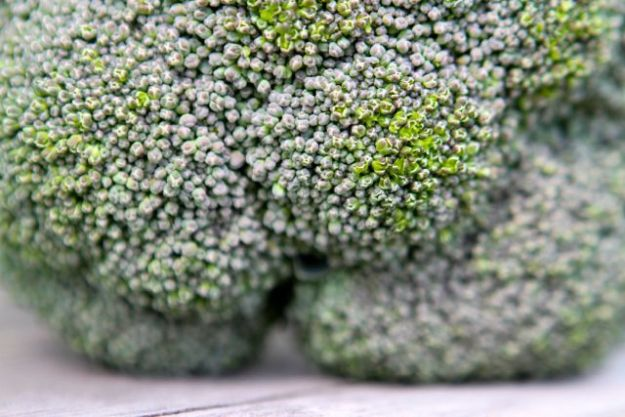 Der erste Brokkoli aus Deutschland. Nicht aus Bio-Anbau, wo Warm-Gewächshäuser untersagt sind