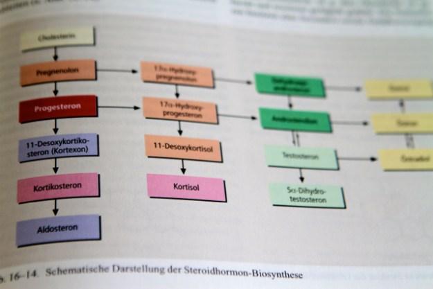 Aus dem Baustoff Cholesterin stellen die Nebennieren Botenstoffe (Steroide) her