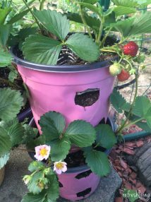Diy Strawberry Planter Recycled Materials