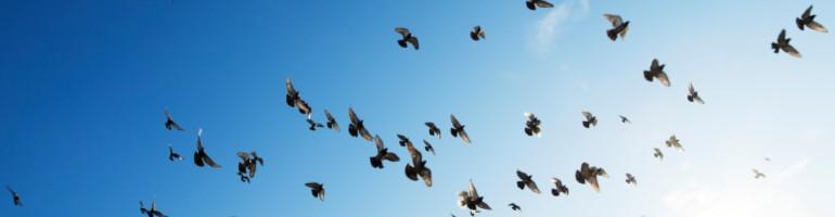 Flock of birds - linkedin for professional consultants