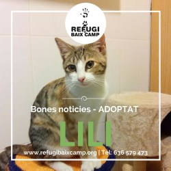 Lili Adoptado