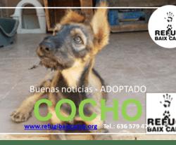 COCHO ADOPTADO
