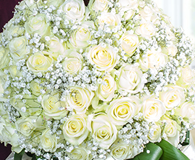 white roses and gypsophila