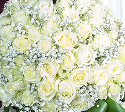 white roses and gypsophila