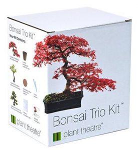 occorrente per coltivare 3 bonsai