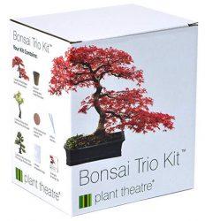 Kit-bonsai-e1550500706856.jpg