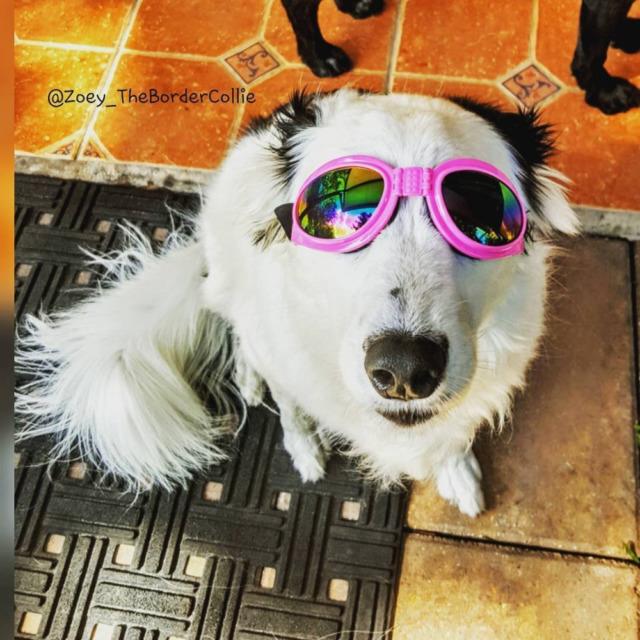 Doggles for Dogs Lentes o gafas para perros, Estos Son impermeables