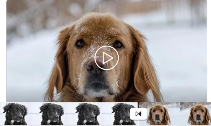 6 Best Online Video Editors No Watermark