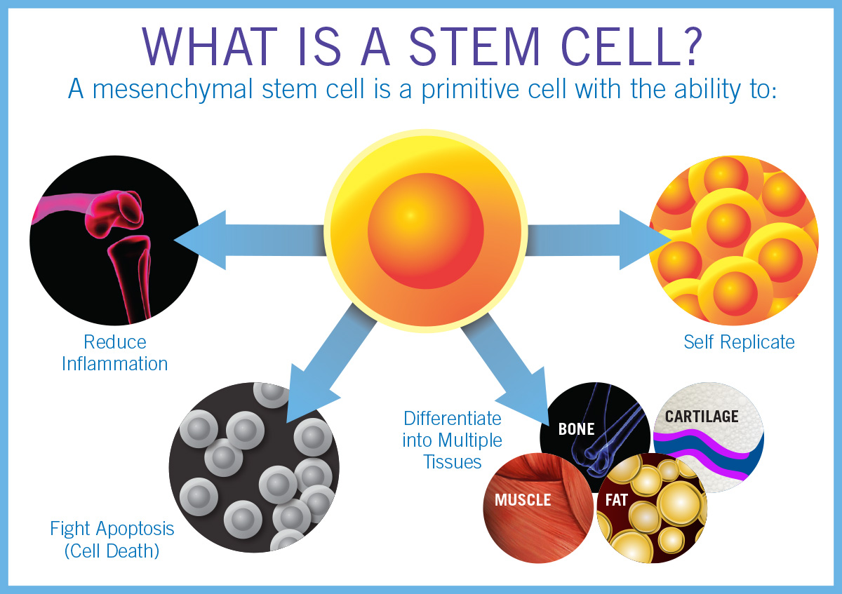 How Stem Cell Therapy Works