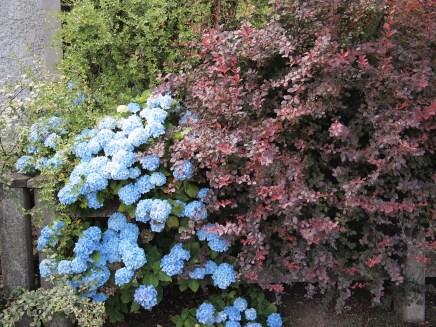 Castleblayney Flowers