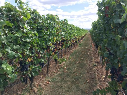 Freinsheim Kulinarische Weinwanderung 2018