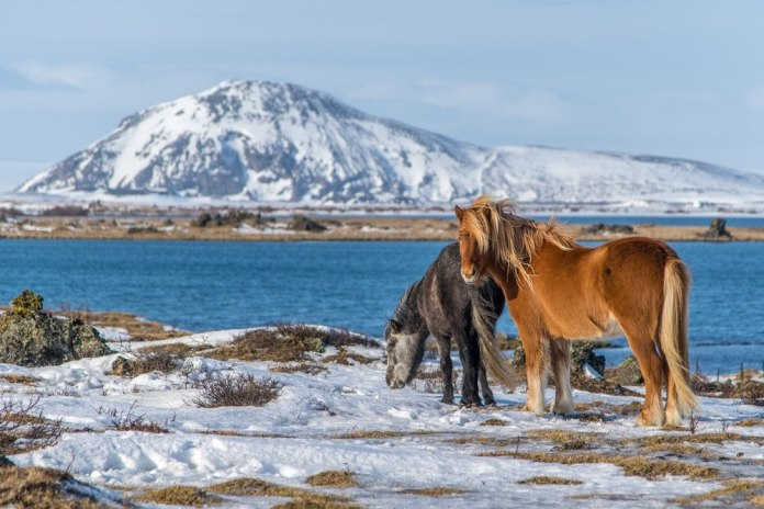 Image result for Mývatn,Iceland